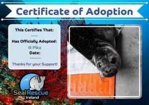 Seal Adoptions