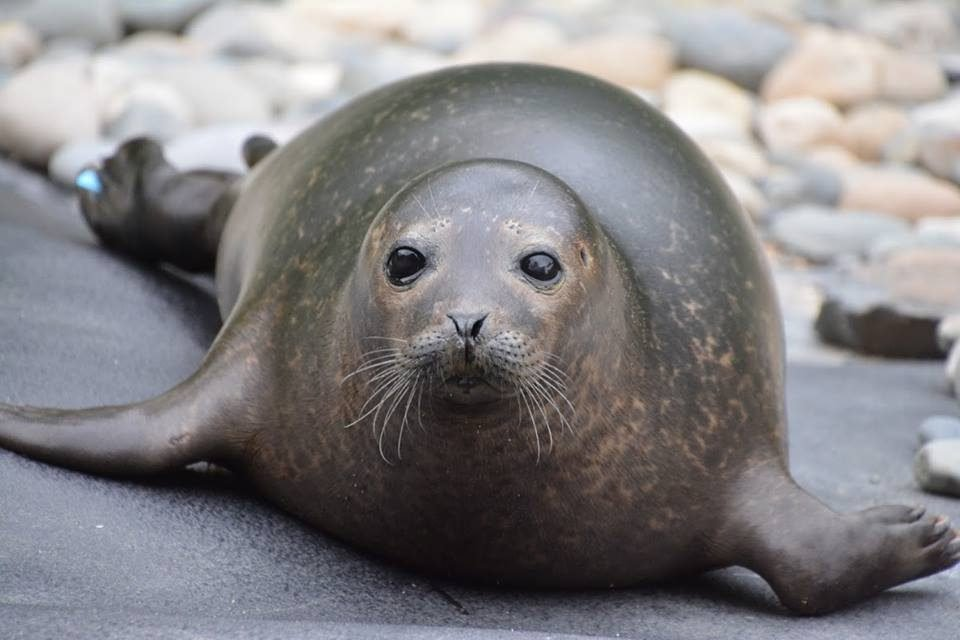 Seal Info - Seal Rescue Ireland