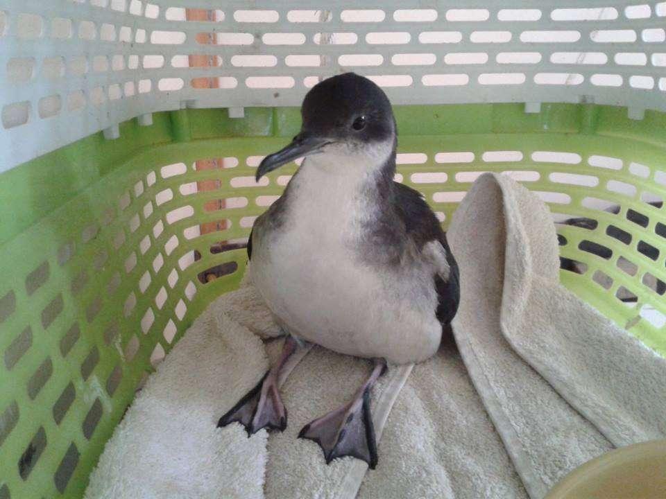 Wildlife Bird Rescue Seal Rescue Ireland