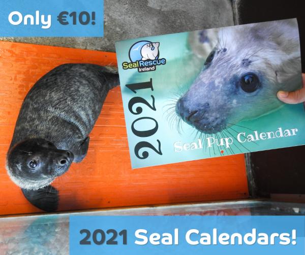 2021 Seal Calendar