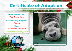 Christmas Adoption