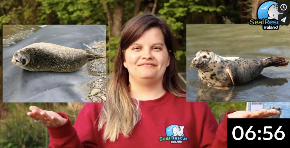 Intro to Seals