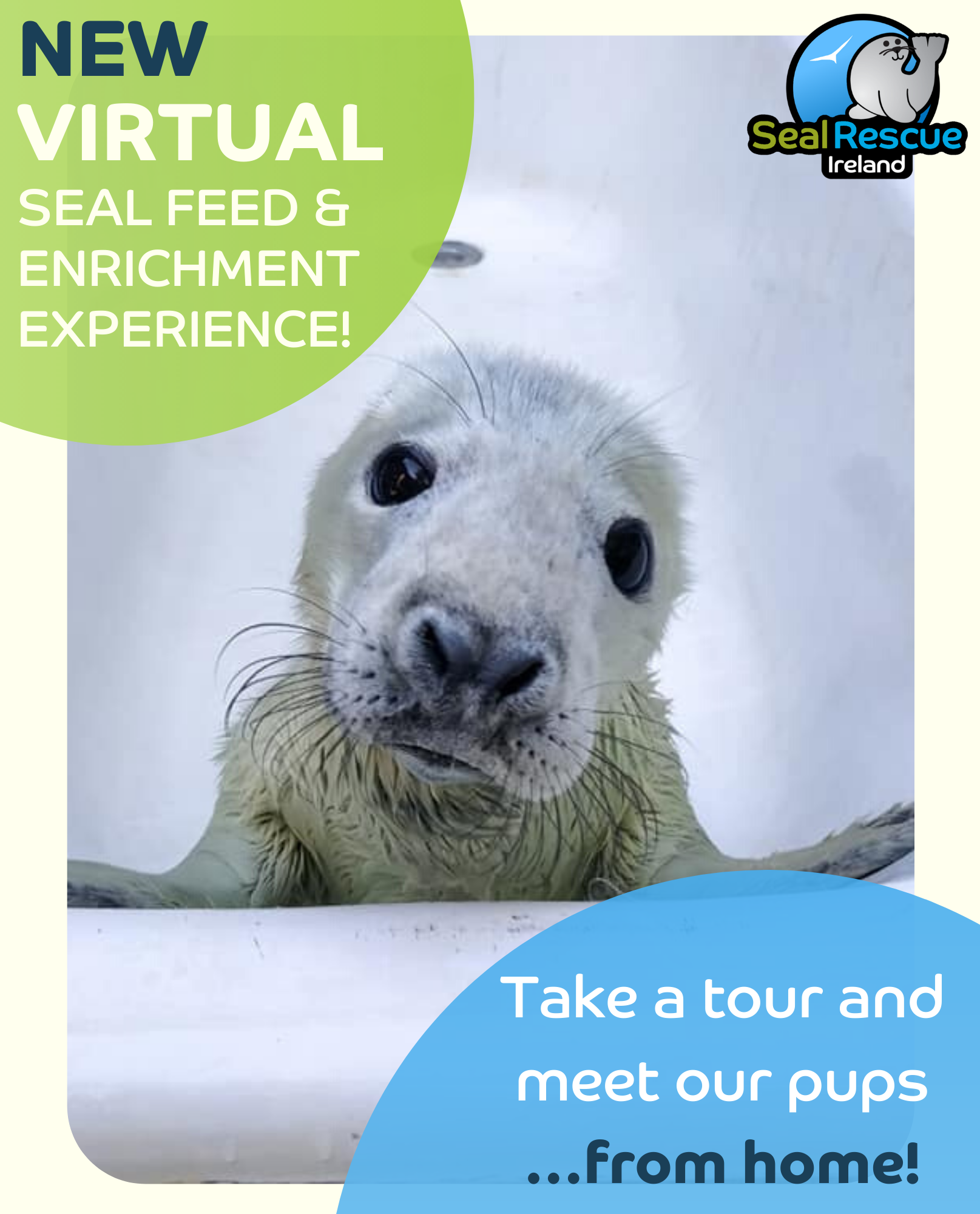 Virtual Seal Feed and Enrichment Experience Poster Seal Rescue Ireland