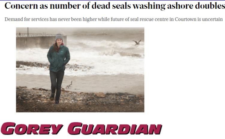 Dead Seals Gorey Guardian Article