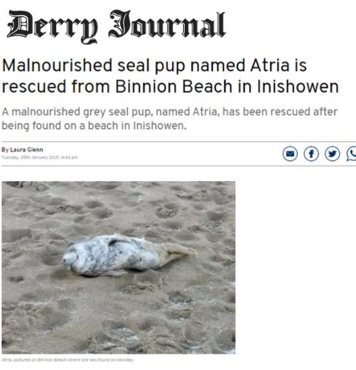Atria Seal Pup Inishowen Article