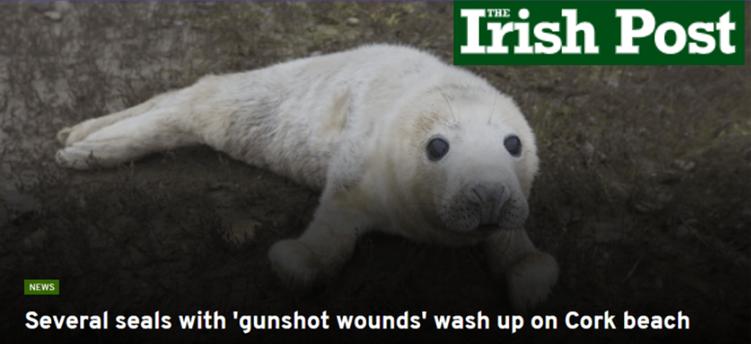 Irish Post Dead Seals in Cork