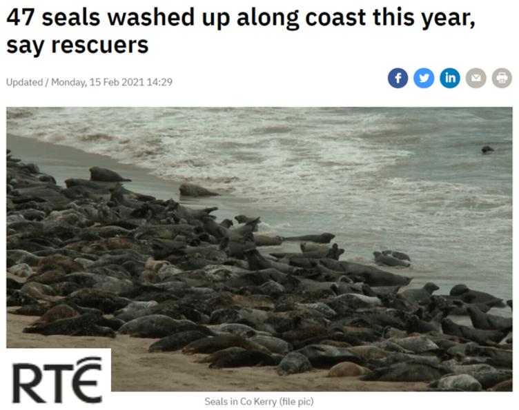 RTE article dead seal reports