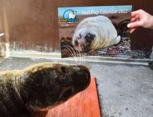 2022 Seal Calendar